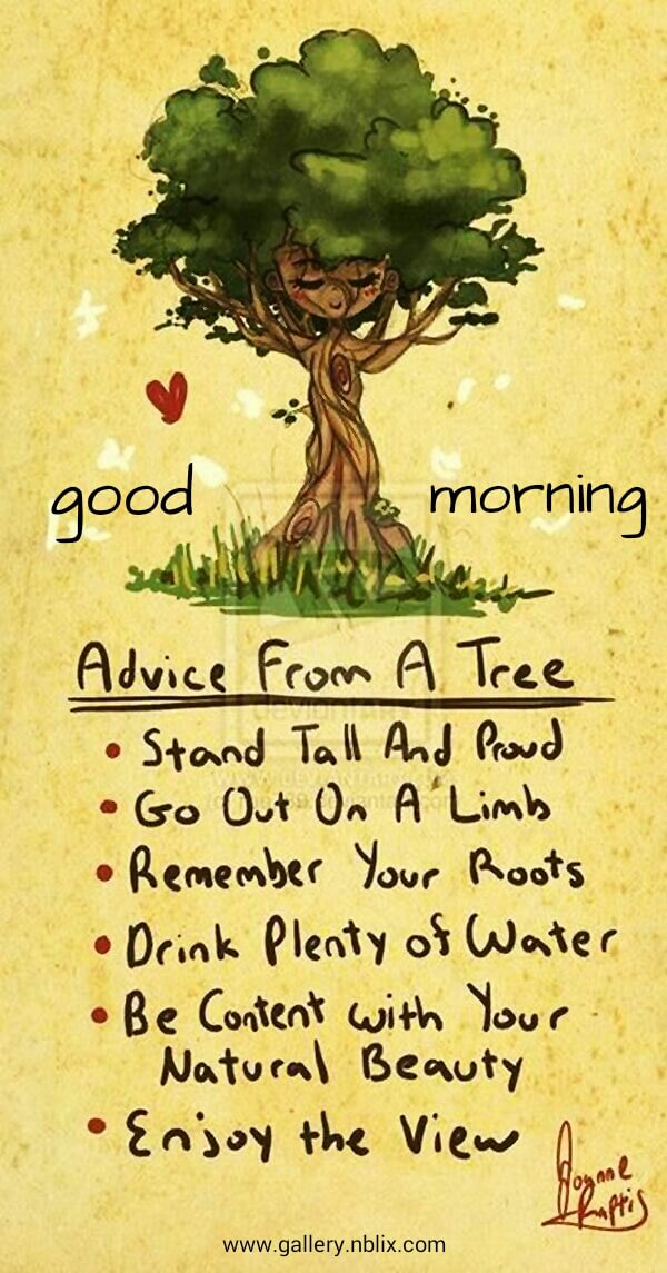 Advice from a tree. Stand tall and proud, go out on a limb, remember your roots, drink plenty of water, be content with your natural beauty, enjoy the view.